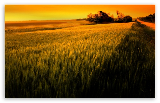 Sunset Over Wheat Field ❤ 4K UHD Wallpaper for Wide 16:10 5:3 Widescreen WHXGA WQXGA WUXGA WXGA WGA ; 4K UHD 16:9 Ultra High Definition 2160p 1440p 1080p 900p 720p ; Standard 4:3 5:4 3:2 Fullscreen UXGA XGA SVGA QSXGA SXGA DVGA HVGA HQVGA ( Apple PowerBook G4 iPhone 4 3G 3GS iPod Touch ) ; Tablet 1:1 ; iPad 1/2/Mini ; Mobile 4:3 5:3 3:2 16:9 5:4 - UXGA XGA SVGA WGA DVGA HVGA HQVGA ( Apple PowerBook G4 iPhone 4 3G 3GS iPod Touch ) 2160p 1440p 1080p 900p 720p QSXGA SXGA ; Dual 16:10 5:3 16:9 4:3 5:4 WHXGA WQXGA WUXGA WXGA WGA 2160p 1440p 1080p 900p 720p UXGA XGA SVGA QSXGA SXGA ;