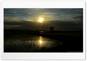 Sunset Reflects On Rice Land HD Wide Wallpaper for Widescreen