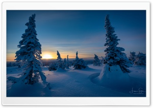 Sunset, Riisitunturi, Trees, Winter, Finland Ultra HD Wallpaper for 4K UHD Widescreen desktop, tablet & smartphone