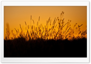 Sunset through Grass HD Wide Wallpaper for Widescreen