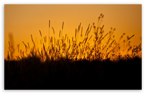 Sunset through Grass ❤ 4K UHD Wallpaper for Wide 16:10 5:3 Widescreen WHXGA WQXGA WUXGA WXGA WGA ; 4K UHD 16:9 Ultra High Definition 2160p 1440p 1080p 900p 720p ; UHD 16:9 2160p 1440p 1080p 900p 720p ; Standard 4:3 5:4 3:2 Fullscreen UXGA XGA SVGA QSXGA SXGA DVGA HVGA HQVGA ( Apple PowerBook G4 iPhone 4 3G 3GS iPod Touch ) ; Smartphone 5:3 WGA ; Tablet 1:1 ; iPad 1/2/Mini ; Mobile 4:3 5:3 3:2 16:9 5:4 - UXGA XGA SVGA WGA DVGA HVGA HQVGA ( Apple PowerBook G4 iPhone 4 3G 3GS iPod Touch ) 2160p 1440p 1080p 900p 720p QSXGA SXGA ;