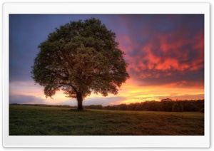 Sunset Tree HD Wide Wallpaper for Widescreen