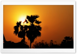Sunset with Palm Tree HD Wide Wallpaper for 4K UHD Widescreen desktop & smartphone