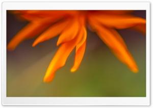 Sunshine Flower HD Wide Wallpaper for Widescreen