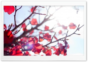 Sunshine Through A Red Tree HD Wide Wallpaper for Widescreen
