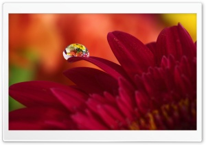 Super Macro Reflection HD Wide Wallpaper for Widescreen