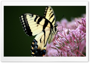 Superb Butterfly Macro HD Wide Wallpaper for Widescreen