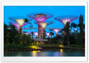 Supertree Grove, Gardens by the Bay, Singapore HD Wide Wallpaper for Widescreen