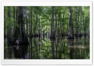 Swamp HD Wide Wallpaper for Widescreen