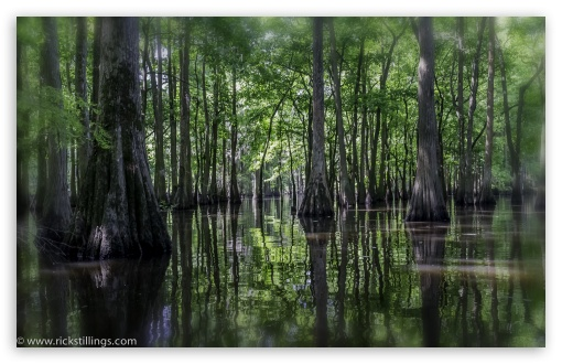 Swamp ❤ 4K UHD Wallpaper for Wide 16:10 5:3 Widescreen WHXGA WQXGA WUXGA WXGA WGA ; 4K UHD 16:9 Ultra High Definition 2160p 1440p 1080p 900p 720p ; UHD 16:9 2160p 1440p 1080p 900p 720p ; Mobile 5:3 16:9 - WGA 2160p 1440p 1080p 900p 720p ;