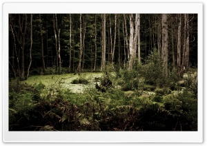 Swamp Forest HD Wide Wallpaper for Widescreen