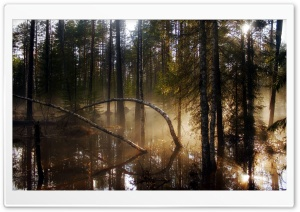 Swamp Forest Morning Mist Ultra HD Wallpaper for 4K UHD Widescreen desktop, tablet & smartphone