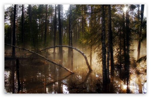 Swamp Forest Morning Mist HD wallpaper for Standard 4:3 5:4 Fullscreen UXGA XGA SVGA QSXGA SXGA ; Wide 16:10 5:3 Widescreen WHXGA WQXGA WUXGA WXGA WGA ; HD 16:9 High Definition WQHD QWXGA 1080p 900p 720p QHD nHD ; Other 3:2 DVGA HVGA HQVGA devices ( Apple PowerBook G4 iPhone 4 3G 3GS iPod Touch ) ; Mobile VGA WVGA iPhone iPad PSP Phone - VGA QVGA Smartphone ( PocketPC GPS iPod Zune BlackBerry HTC Samsung LG Nokia Eten Asus ) WVGA WQVGA Smartphone ( HTC Samsung Sony Ericsson LG Vertu MIO ) HVGA Smartphone ( Apple iPhone iPod BlackBerry HTC Samsung Nokia ) Sony PSP Zune HD Zen ; Tablet 2 Android ; Dual 4:3 5:4 16:10 5:3 16:9 UXGA XGA SVGA QSXGA SXGA WHXGA WQXGA WUXGA WXGA WGA WQHD QWXGA 1080p 900p 720p QHD nHD ;