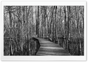 Swamp, Trees, Black and White HD Wide Wallpaper for Widescreen