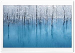 Swamp Winter HD Wide Wallpaper for Widescreen