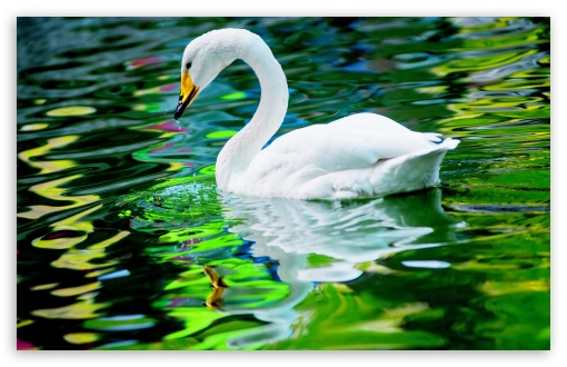 Swan ❤ 4K UHD Wallpaper for Wide 16:10 5:3 Widescreen WHXGA WQXGA WUXGA WXGA WGA ; 4K UHD 16:9 Ultra High Definition 2160p 1440p 1080p 900p 720p ; UHD 16:9 2160p 1440p 1080p 900p 720p ; Standard 4:3 5:4 3:2 Fullscreen UXGA XGA SVGA QSXGA SXGA DVGA HVGA HQVGA ( Apple PowerBook G4 iPhone 4 3G 3GS iPod Touch ) ; Tablet 1:1 ; iPad 1/2/Mini ; Mobile 4:3 5:3 3:2 16:9 5:4 - UXGA XGA SVGA WGA DVGA HVGA HQVGA ( Apple PowerBook G4 iPhone 4 3G 3GS iPod Touch ) 2160p 1440p 1080p 900p 720p QSXGA SXGA ; Dual 16:10 5:3 4:3 5:4 WHXGA WQXGA WUXGA WXGA WGA UXGA XGA SVGA QSXGA SXGA ;