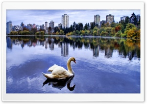 Swan HDR HD Wide Wallpaper for 4K UHD Widescreen desktop & smartphone