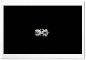 Swans HD Wide Wallpaper for 4K UHD Widescreen desktop & smartphone