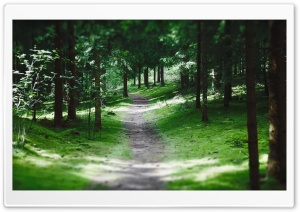 Swedish Forest Path HD Wide Wallpaper for Widescreen