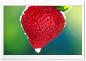 Sweet Summer Strawberry HD Wide Wallpaper for Widescreen
