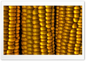 Sweetcorn HDR HD Wide Wallpaper for Widescreen