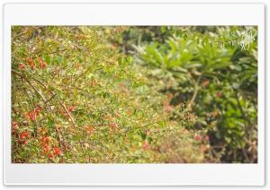Swiss Garden HD Wide Wallpaper for Widescreen