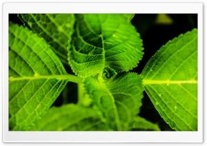 Symmetric Plant HD Wide Wallpaper for 4K UHD Widescreen desktop & smartphone