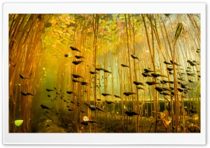 Tadpoles, Canada Ultra HD Wallpaper for 4K UHD Widescreen desktop, tablet & smartphone