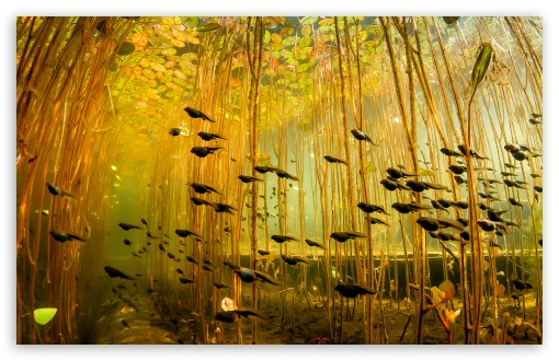 Tadpoles, Canada HD wallpaper for Standard 4:3 5:4 Fullscreen UXGA XGA SVGA QSXGA SXGA ; Wide 16:10 5:3 Widescreen WHXGA WQXGA WUXGA WXGA WGA ; HD 16:9 High Definition WQHD QWXGA 1080p 900p 720p QHD nHD ; Other 3:2 DVGA HVGA HQVGA devices ( Apple PowerBook G4 iPhone 4 3G 3GS iPod Touch ) ; Mobile VGA WVGA iPhone iPad PSP Phone - VGA QVGA Smartphone ( PocketPC GPS iPod Zune BlackBerry HTC Samsung LG Nokia Eten Asus ) WVGA WQVGA Smartphone ( HTC Samsung Sony Ericsson LG Vertu MIO ) HVGA Smartphone ( Apple iPhone iPod BlackBerry HTC Samsung Nokia ) Sony PSP Zune HD Zen ; Tablet 2 ;