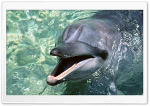 Talking Dolphin Ultra HD Wallpaper for 4K UHD Widescreen desktop, tablet & smartphone