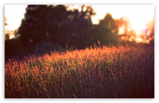 Tall Grass, Sunset ❤ 4K UHD Wallpaper for Wide 16:10 5:3 Widescreen WHXGA WQXGA WUXGA WXGA WGA ; 4K UHD 16:9 Ultra High Definition 2160p 1440p 1080p 900p 720p ; Standard 4:3 5:4 3:2 Fullscreen UXGA XGA SVGA QSXGA SXGA DVGA HVGA HQVGA ( Apple PowerBook G4 iPhone 4 3G 3GS iPod Touch ) ; Tablet 1:1 ; iPad 1/2/Mini ; Mobile 4:3 5:3 3:2 16:9 5:4 - UXGA XGA SVGA WGA DVGA HVGA HQVGA ( Apple PowerBook G4 iPhone 4 3G 3GS iPod Touch ) 2160p 1440p 1080p 900p 720p QSXGA SXGA ; Dual 16:10 5:3 4:3 5:4 WHXGA WQXGA WUXGA WXGA WGA UXGA XGA SVGA QSXGA SXGA ;