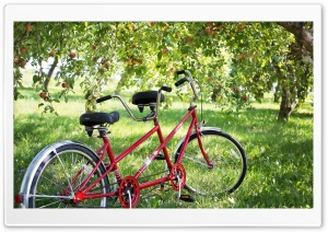 Tandem Bike HD Wide Wallpaper for 4K UHD Widescreen desktop & smartphone