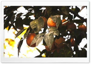 Tangerine Tree HD Wide Wallpaper for Widescreen