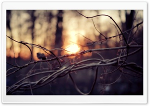 Tangled Branches HD Wide Wallpaper for Widescreen