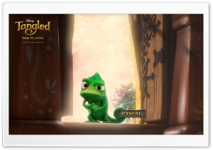 Tangled Pascal HD Wide Wallpaper for Widescreen