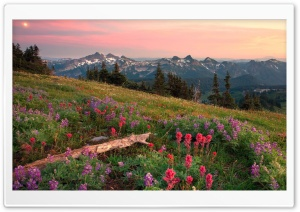 Tatoosh Range Mount Rainier Washington HD Wide Wallpaper for Widescreen