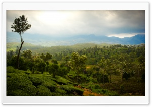 Tea Mountains HD Wide Wallpaper for Widescreen