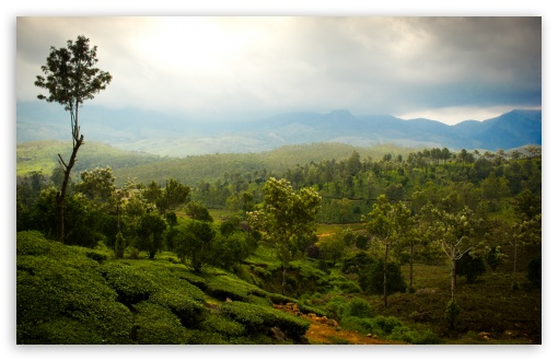 Tea Mountains HD wallpaper for Wide 16:10 5:3 Widescreen WHXGA WQXGA WUXGA WXGA WGA ; HD 16:9 High Definition WQHD QWXGA 1080p 900p 720p QHD nHD ; UHD 16:9 WQHD QWXGA 1080p 900p 720p QHD nHD ; Standard 4:3 5:4 3:2 Fullscreen UXGA XGA SVGA QSXGA SXGA DVGA HVGA HQVGA devices ( Apple PowerBook G4 iPhone 4 3G 3GS iPod Touch ) ; Tablet 1:1 ; iPad 1/2/Mini ; Mobile 4:3 5:3 3:2 16:9 5:4 - UXGA XGA SVGA WGA DVGA HVGA HQVGA devices ( Apple PowerBook G4 iPhone 4 3G 3GS iPod Touch ) WQHD QWXGA 1080p 900p 720p QHD nHD QSXGA SXGA ;