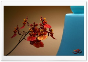 Teacup Tolumneia Ultra HD Wallpaper for 4K UHD Widescreen desktop, tablet & smartphone
