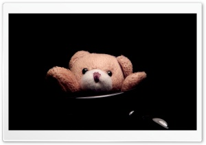 Teddy Ultra HD Wallpaper for 4K UHD Widescreen desktop, tablet & smartphone