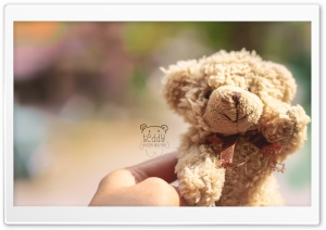 Teddy HD Wide Wallpaper for 4K UHD Widescreen desktop & smartphone