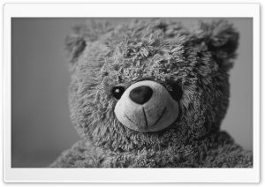 Teddy Bear HD Wide Wallpaper for Widescreen