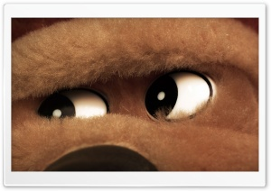 Teddy Bear Eyes HD Wide Wallpaper for Widescreen