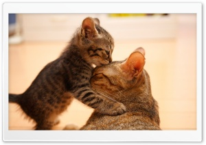 Tender Moment Between A Cat And Her Kitten Ultra HD Wallpaper for 4K UHD Widescreen desktop, tablet & smartphone