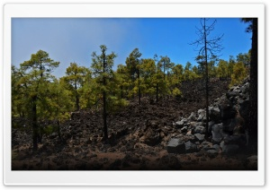 Tenerife Forest HD Wide Wallpaper for Widescreen