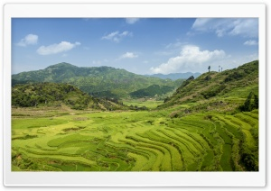 Terraced fields in SaPa HD Wide Wallpaper for 4K UHD Widescreen desktop & smartphone