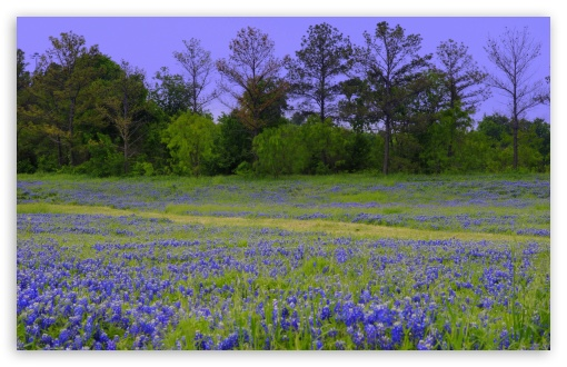 Texas Bluebonnet Field ❤ 4K UHD Wallpaper for Wide 16:10 5:3 Widescreen WHXGA WQXGA WUXGA WXGA WGA ; 4K UHD 16:9 Ultra High Definition 2160p 1440p 1080p 900p 720p ; UHD 16:9 2160p 1440p 1080p 900p 720p ; Standard 4:3 5:4 3:2 Fullscreen UXGA XGA SVGA QSXGA SXGA DVGA HVGA HQVGA ( Apple PowerBook G4 iPhone 4 3G 3GS iPod Touch ) ; Smartphone 5:3 WGA ; Tablet 1:1 ; iPad 1/2/Mini ; Mobile 4:3 5:3 3:2 16:9 5:4 - UXGA XGA SVGA WGA DVGA HVGA HQVGA ( Apple PowerBook G4 iPhone 4 3G 3GS iPod Touch ) 2160p 1440p 1080p 900p 720p QSXGA SXGA ;