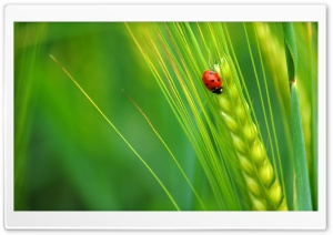 The Adventures of Ladybug HD Wide Wallpaper for 4K UHD Widescreen desktop & smartphone