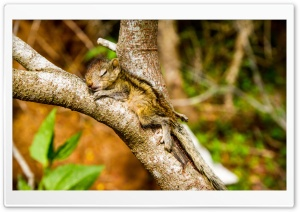 The Baby Squirrel Takes A Nap Ultra HD Wallpaper for 4K UHD Widescreen desktop, tablet & smartphone