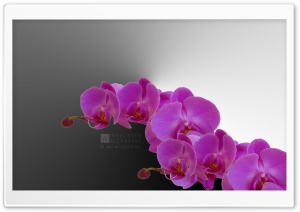 The Beauty of Simplicity Ultra HD Wallpaper for 4K UHD Widescreen desktop, tablet & smartphone
